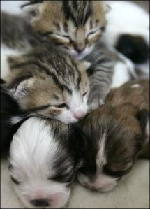 cat3_380x529_743994a